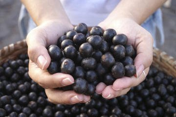Seeds and Farms,15 Seeds Acai Palm An Extraordinary Antioxidant-Rich Palm Fruit (IMAGE)